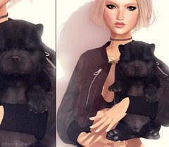 N21 ( Stasey Oller ) Tags: black bantam pink acid n21 chow puppies puppy second life