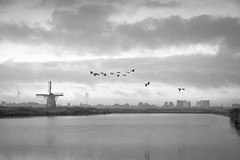 160917_SAM_8703 (Jan Jacob Trip) Tags: leiderdorp munnikenpolder molen water geese goose bird windmill cloud sky black landscape white bw netherlands polder