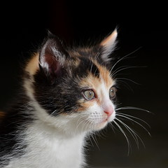 It's me ! (Le pot-ager - Un bleu chez les vieux :-)) Tags: cat kitten chat chaton bestofcat meschats