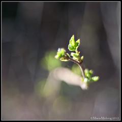 Leaves (mmoborg) Tags: sweden sverige mmoborg mariamoborg