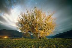 Tree by the Lake (Luke Tscharke) Tags: longexposure newzealand lake tree stars geotagged cloudy nz otago ladder wakatipu kinloch glenorchy geo:lat=44844175972345994 geo:lon=1683497018362183