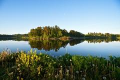 Summer Dawn (Arkku) Tags: flowers trees sea summer moon reflection water finland dawn helsinki flora fuji outdoor dandelion shore m42 fujinon herttoniemi dandelionclock herttoniemenranta fujinon19mmf35 ebcfujinon