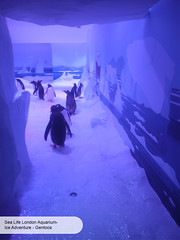London Aquarium Ice Adventure penguin gentoo (ravenhill design) Tags: design immersive interactive bas londonaquarium happycampers spidercrab ravenhill researchstation gentoopenguins britishantarcticsurvey iceadventure crawlthrough ravenhilldesign