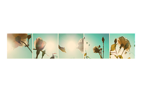 Flower Power Photo Series -- 11x17