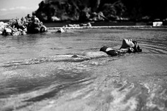 horizontal (gorbot.) Tags: blackandwhite bw f14 swimmingpool sicily roberta canoneos5d santaflavia nikonfmount planar5014zf silverefex carlzeisszf50mmplanarf14 eosadaptor kafarahotel