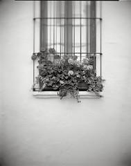Sant Gaudenci 19 (rabato) Tags: flores ventana f45 sitges 19 foma100 fomadonr09 petzval santgaudenci