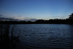 IMG_6770 (Kangeyan Kumaran) Tags: photography kulam marapaalayam ashokn