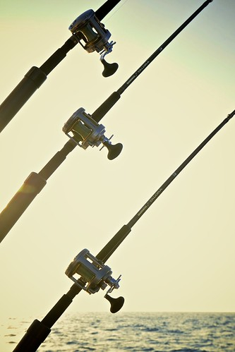 Rods Basking in the Sun