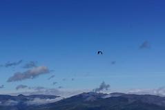 guila (TopFotografer) Tags: eagle adler aguila aquila guia aigle