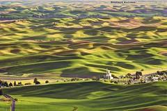 Ground Swell (Stephen Kacirek) Tags: goldenhour palouse easternwashington steptoe palousehills steptoebutte goldenhourpalouse