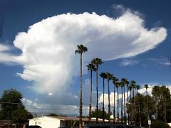 huge_fan2 (vidkid_allison) Tags: tucsonarizona monsoons thunderheads skies clouds monsoonclouds