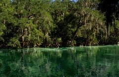Blue spring state park (Hi Lary) Tags: outdoor outside extrieur dcor paysage magnifique merveilleuseplace blue placetogo wow amazing beautifulplace turquoise bleu eau water bluespringstatepark lagoon bluelagoon florida tatsunis usa floride