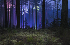 Magical Forest (mishamikheev) Tags:               44       7 magic forest night party disco trance psitrans goa nature pine atmosphere atmospherically colors miracle gelios44 cool krastota fog haze romantic sonya7s