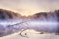 Sunrise throught the mist (Olli Tasso) Tags: branch fog mist savu usva sumu oksa birch koivu lampi pond lake tampere viitapohja suomi finland landscape scenery maisema summer august elokuu morning sunrise aamu auringonnousu kes jrvi mets