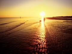 A beautiful sunset with my love (Marc Gommans) Tags: sea outdoor panasonic14mmf25 primelens summer zee cadzandbad dutch dog people love sam northsea zomer vakantie holidays hund hond sunset golden beach strand olympusomdem1 marcgommans