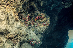 Crabs in Lago Azul, La Palma (Spain) (tommyferraz) Tags: la palma spain canary islands santa cruz nogales los sauces barlovento roque de muchachos observatory isla bonita