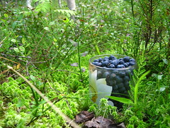 blueberries (VERUSHKA4) Tags: berries blueberry nature canon europe russia karelia forest flora album plant grass bush leaves summer august travel vue view day verdure green black cup mug