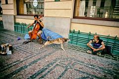 Streetching Out (Steve Lundqvist) Tags: dog stretching perro hund cane homeless prague praga praha czech republic street performer music