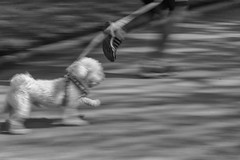 Runner (Mar Cifuentes) Tags: white noiretblanc art dog park street city bw new ciudad santiago streetphoto calle runner correr barrido chile parquebustamante