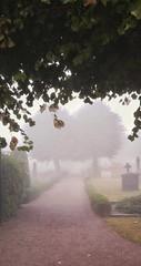 Graveyard (catha.li) Tags: graveyard fog sweden lgg4