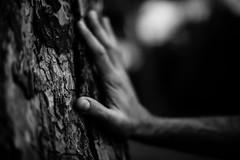 Carezza (Stefania Pascucci) Tags: mano hand carezza caress corteccia bark