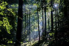 Let there be light (ralfkai41) Tags: ngc shadow landscape landschaft nature lichtstrahlen outdoor licht wald natur light bume trees schatten forest sun sunlight sonnenlicht beamoflight woods sonne
