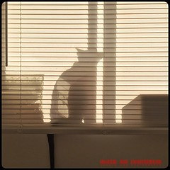 Shadow Cat (Viveca Koh FRPS) Tags: iphoneography instagram iphone silhouette siamese light tail windowsill cat shadow venetianblind