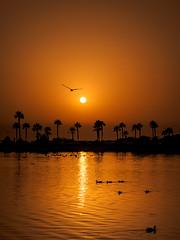 Ataredeceres (Dgueza) Tags: naranja patos atardecer orange sunset olympus