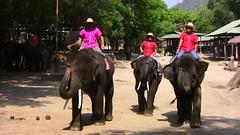 THAILAND-N, Elefantencamp Maetaman, Begrung , 54 (roba66) Tags: travel animal animals thailand tiere asia asien urlaub safari explore thai elephants creature thailandia tier eastasia elefanten elefantencamp earthasia thailandn roba66 thailandelefantencamporchideenfarm