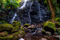 READY WITH THE FIRST AID KIT!!!! (matt burman) Tags: cliff waterfall moss rainforest rocks stream australia bluemountains nsw ferns mtwilson photographerinaction colinbates mattburman