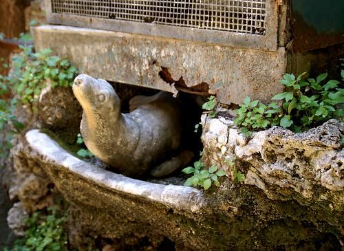 Rom, Via del Gesù, Palazzo Berardi, Seehund im Becken der Wasseruhr