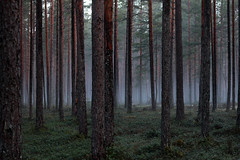 km 16 05 005 (grandeallegro) Tags: morning summer forest woods mai mets 2012 loodus hommik kilinginmme