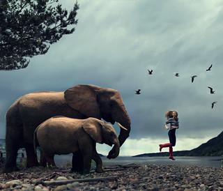 Living The Wildlife