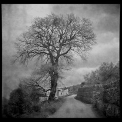 World Painted (Giorgio Verdiani) Tags: road light blackandwhite italy tree 6x6 film clouds start mediumformat florence strada italia nuvole campania cloudy xp2 workshop firenze sa albero bakelite ilford salerno biancoenero 400asa leaks 400iso seminario nuvoloso pellicola pouva irpinia medioformato architecturefaculty fatroll facoltdiarchitettura alburni bachelite salvitelle infiltrazioneluce progettazionedinuoviruoliperterritoriinabbandono