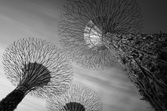 Lifeforms (Scintt) Tags: new city morning sky bw cloud white abstract motion black blur reflection tree nature gardens by architecture modern clouds marina sunrise buildings way landscape dawn mono bay early hall big movement singapore long exposure cityscape slow place branches alien roots trails surreal vine images tourist structure minimal glossy filter lee simplicity shutter getty dreamy desaturated minimalism sands simple minimalistic wispy attractions density mbs stopper raffles construct neutral otherworldly shenton simplistic scintillation supertrees scintt gettysingapore