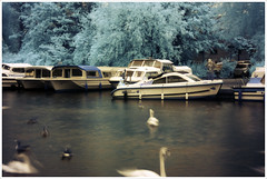 Swan Movements (majestiele) Tags: temp camera trees canon river ir bure geese swan norfolk ducks wb infrared nm moorings wroxham 760 unmodded boatspeople whiteeffect