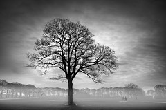 Take me home...... (Chrisconphoto) Tags: bw mist tree mood drama walkers sherdleypark