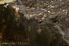 "American Dipper • <a style=""font-size:0.8em;"" href=""http://www.flickr.com/photos/63501323@N07/7605480312/"" target=""_blank"">View on Flickr</a>"
