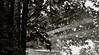 """Giochi di luce ed acqua ("""" paolo ammannati """") Tags: flowers me water foglie alberi forest estate top natura ombre io cielo acqua riflessi biancoenero bosco casentino foresta gocce paoloammannati goccioline effettinaturali"""