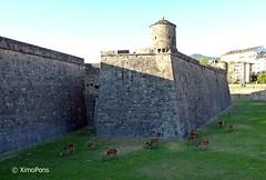 Jaca - Ciudadela de Jaca  .P1000434 (XimoPons : vistas 3000.000 views) Tags: espaa spain huesca aragon ciudadela caminodesantiago jaca pirineos aragn ximopons