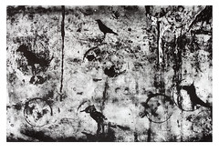 Photopolymer Etching (artist proof) (Michael Ast) Tags: abstract etching fineart expressionism printmaking aviary crow crows raven ornithology blackbird ravens abstractexpressionism photopolymer charbonneletwalker tusche photoetching charbonnel artistproof hahnemuhle backbirds photopolymeretching michaelast charbonnelink hanhnemuhlecopperplate
