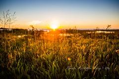 20160828-IMG_7762-WM (Pamela McLellan Zmija) Tags: pamelamclellanzmija saugeenshores portelgin sunset beach lakehuron goblesgrove sunshine