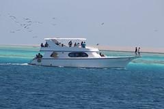 IMG_3022_Hurghada 2016 the best of (Adam Is A D.j.) Tags: wismec vape hurghada egypt red sea mahmya desert rose resorts travel beach sun nature canon 5d mark iii 700d