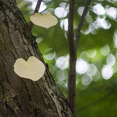 Loving The Woods (Fourteenfoottiger) Tags: autumn helios helios44m 13blade bokeh bubblebokeh branches treetrunk trees woods woodland dof depthoffield heart abstract falling fall sunlight dappled dappledlight