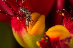 IMG_3129-2 1200 (Macrophotography and Close-up) Tags: flower flores bugs insetos insects macro closeup macrofotografia macrophotography jardim gardem nature natureza vida silvestre wildlife spider butterflies ladybug animal inseto ao ar livre