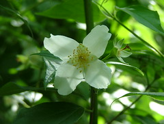 769 (jHc__johart) Tags: tree blooms illinois