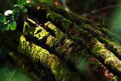 Campo 205 (Constanza Romero L.) Tags: sony alpha chile gorbea sonyflickraward winter invierno nature naturaleza paisaje landscape tronco wood moss musgo light luz green verde macro
