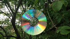 Tree CD (Joybot) Tags: cd tree garden bird scare scarecrow hang hanging spin spinning disc compactdisc pirate shine shiny twist twisting branch