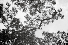 Abtract of Tree in Black & White (danliecheng) Tags: abstract artistic blackandwhite leaves pool reflection sky stems tree trunk water