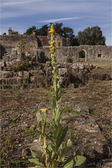 Bayham Abbey 32 (mini-b) Tags: bayhamabbey ruins englishheritage 13th15thcentury frant eastsussex canon eos5dmkii ef28300mm3556lisusm 2016
